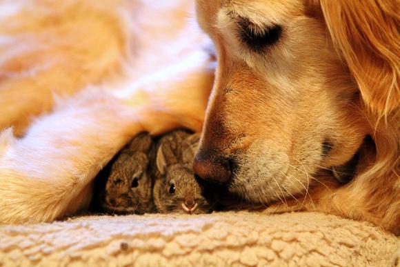Koa and the bunnies