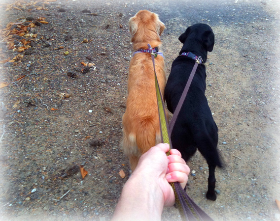 Rally and Koa on their daily hike in the neighborhood.