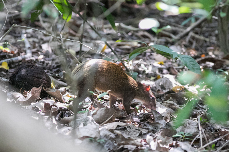 Manuel Antonio National Park Wildlife