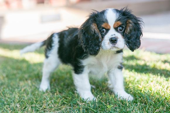 Pet Photography with Tina Case