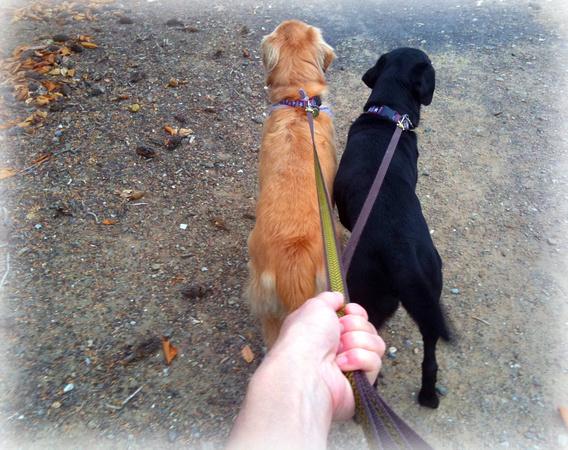 Rally and Koa on their daily hike in the neighborhood.