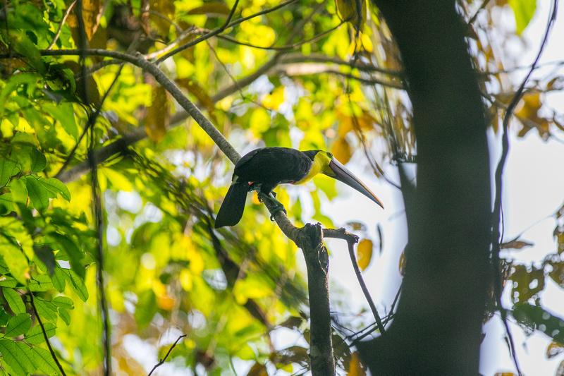 Manuel Antonio National Park Wildlife